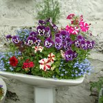 Garden Corner - Recycled Basin with flowers
