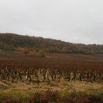 Vue des vignes de Rully