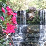 zilker botanical gardens waterfall