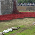 The Amazing sight of the sea of red Poppies around the Tower of London