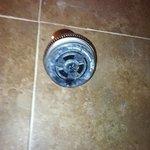 rusty shower head