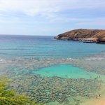 El coral desde afuera
