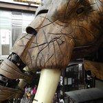 primo piano testa dell'elefante
