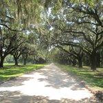 Tree lined entrance