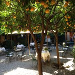 Peaceful dining beneath the orange trees