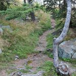 The path to our site
