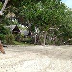 Aore Island Beachfront