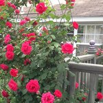 Roses and Inn
