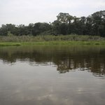Looking for caiman and other wildlife