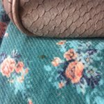Ants on my handbag & daughters clothes