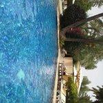 entre piscine et palmier