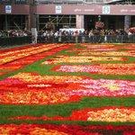 flower carpet 2014