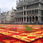 flower carpet 2014 including town hall