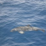 DAUPHIN ( sortie en mer )