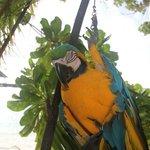 I pappagallo dell'isola