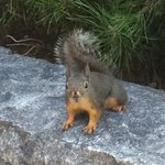 Squirrel omgeving