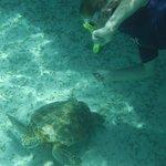 Hol Chan - Sea Turtles!!
