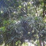 манговые заросли