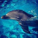 dolphin exibit