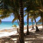 Isla Saona, Punta cana