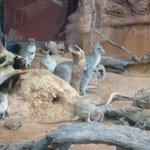 Kangaroo exhibit
