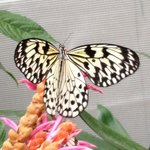 La beauté des papillons en liberté