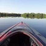Wunderschöne Everglades