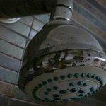 Alcachfa ducha (Hab. 226)