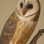 Life-size Barn Owl carving by Wendell Gilley