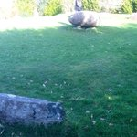 Stone Circle, Kenmare