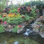 tropical garden on hotel grounds
