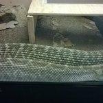 El Teutle Serpientes