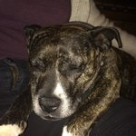 Treacle! The lovely, pub mascot!