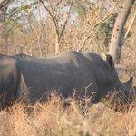 Game Drive - Rhino