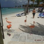 Flamingos on the island
