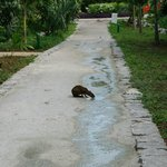 little critter getting a drink on the path to the beach