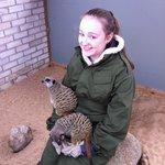 Meerkat Experience