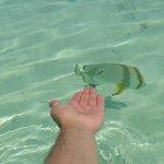рыба не боится людей.такая глубина довольно далеко от берега
