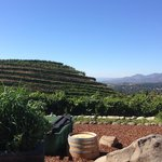 View from Porter Family Vineyards
