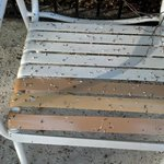 bird poop on pool chair