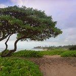 Kauai Beach Villas - Beachfront Path