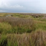 The endless salt marshes are a rare unspoiled beauty.