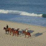 Horseback riding on the beach!