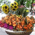 Beautiful Flower for Sale