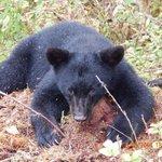 cub taking a rest