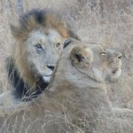 Up close and personal on a game drive! Beautiful!