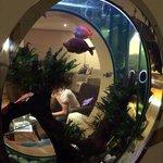 The porthole fish tank at the 4th floor executive lounge