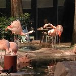 Flamingos im Flamingo ;-)