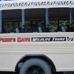 Wildlife tour bus