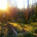Alpine Pond Trail Cedar Breaks